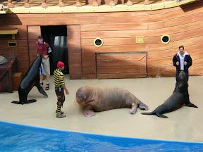 207 - Espectáculo de los leones marinos.JPG