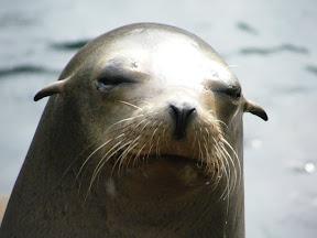220 - Un león marino.JPG