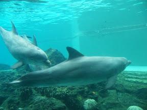 273 - Delfines.JPG
