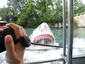 432 - Jaws.JPG