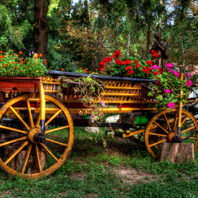 Carriage by Stefan Stevanovic - Transportation Other ( hdr, park, carriage, vintage, grass, art, horse, object, transportation, artwork, park scene, grasses, transport, flowerplot, parks, artistic, artistic object, artist, artistic objects, flowers, objects, flower, , colorful, mood factory, vibrant, happiness, January, moods, emotions, inspiration, renewal, green, trees, forests, nature, natural, scenic, relaxing, meditation, the mood factory, mood, jade, revive, inspirational, earthly )