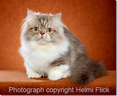napoleon cat photographer Helmi Flick
