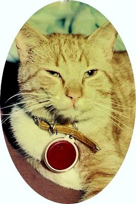 Goldie a feral cat