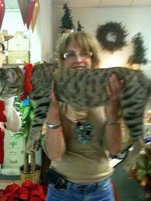 big feral Savannah cat mix
