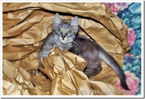 furby with packing paper