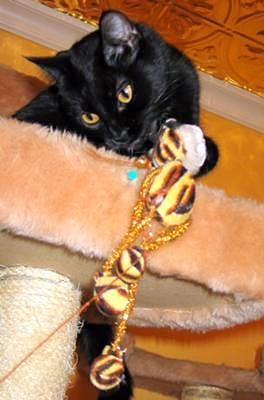Freya and toys - Photo by Julie