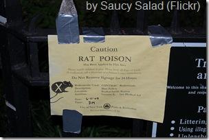 caution rat poison