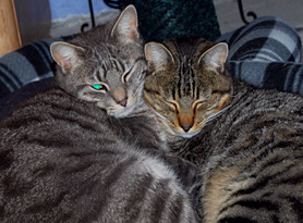 Willie and Joey feral cat brothers