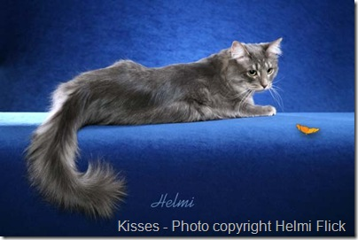 kisses a maine coon cat mix