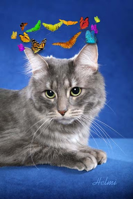 maine coon mix cat