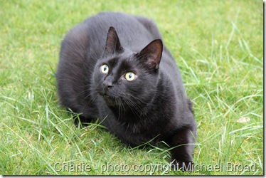 three legged cat Charlie