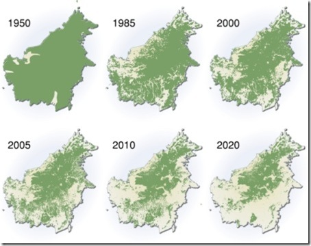 deforestation-borneo
