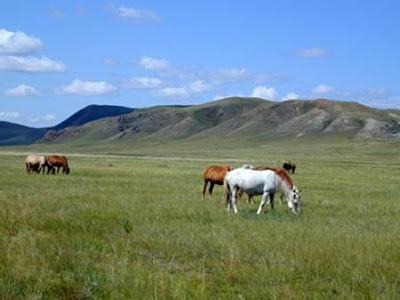 The Daursky State Biosphere Reserve (Zapovednik)