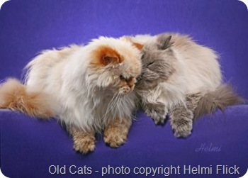 Old cats Pushkin and Smoky loving 1