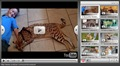 savannah cat video player