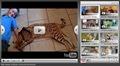 savannah cat video player