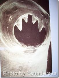 hookworm-poster