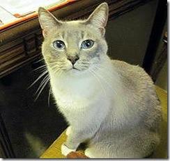 francis-moggie-cat