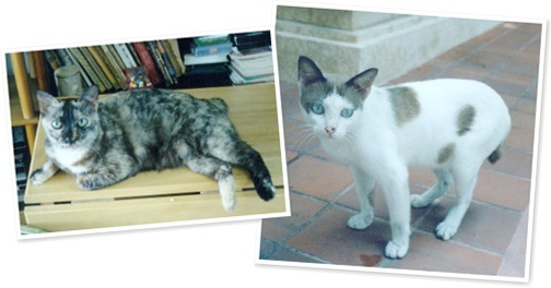 View short tailed thai cats
