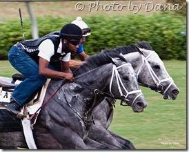 Dana Wimpfheimer horse photo