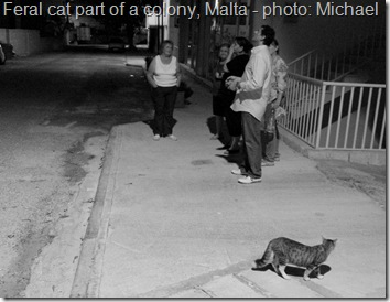 Feral cat colony Malta and Richard the rescuer