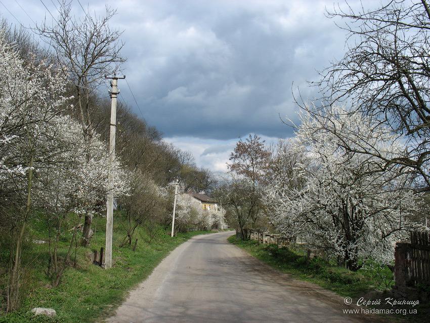 дорога до Микулинецького