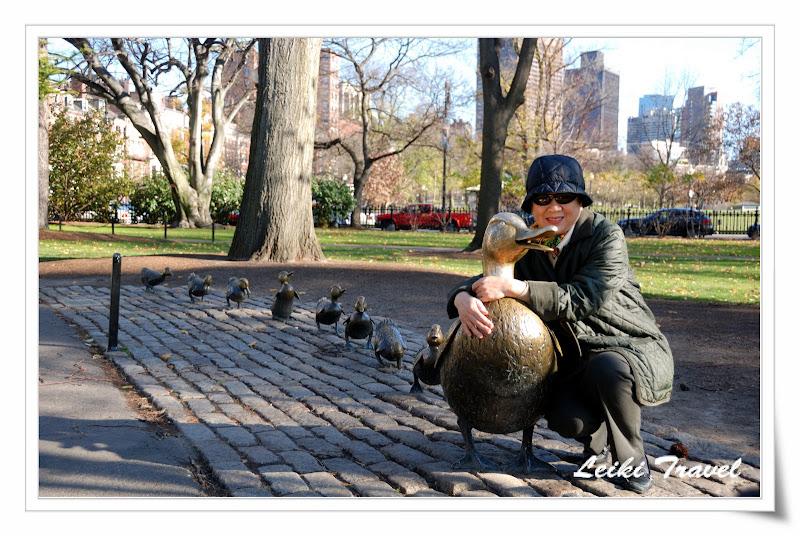 Public Garden - Ducklings