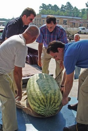 268.8-pound watermelon grown by Lloyd Bright