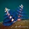 Blue Christmas Tree Worm