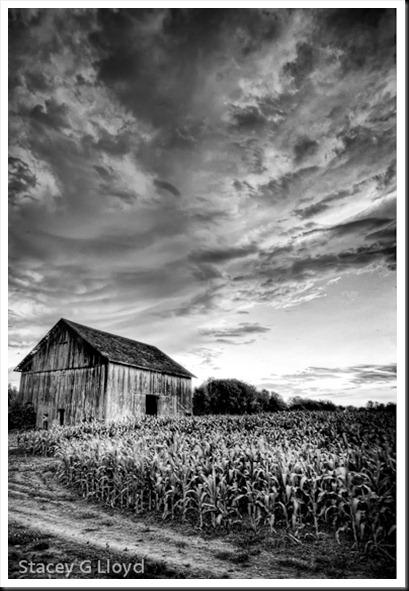 Old Dutch Barn 1