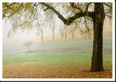 Blog_20101112_1