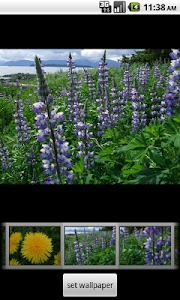 Alaska's Wild Flowers Pro screenshot 0