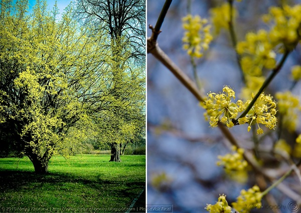 Spring 2010-Diptych by MeetaK