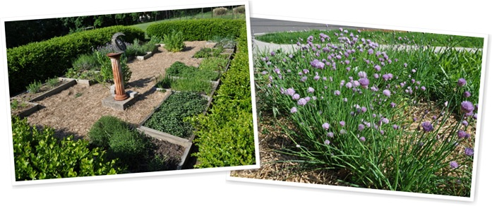 View chives, herbs