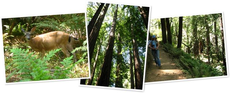 View Muir Woods