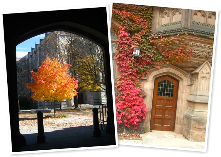 View Princeton fall campus colors