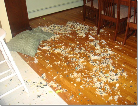 golden retriever destroys dog bed
