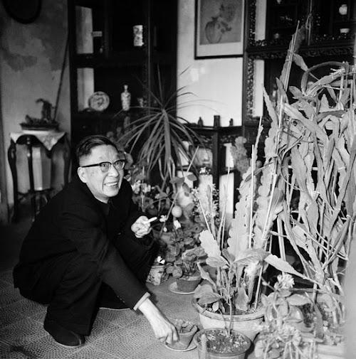 作家、剧作家老舍喜欢莳养花卉。北京,1964年。这一年,《北京文艺》发表了老舍改编的戏曲《王宝钏》.jpg
