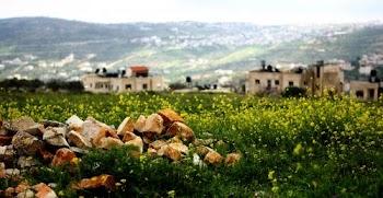 巴勒斯坦春意盎然(组图)