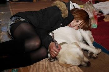 日本动物的震后生活