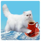 Flying Persian Cat