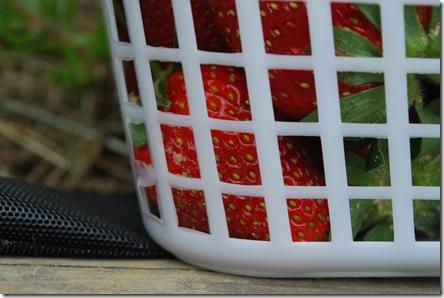 full of strawberry goodness