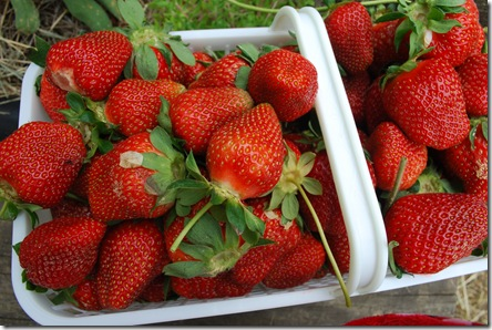 a delicious basket of freshly picked strawberries