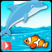 Dolphin Life