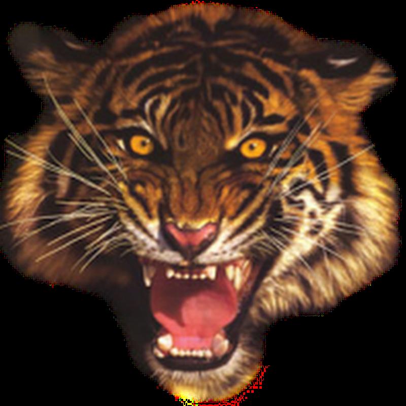 Imágenes de tigres para photoshop