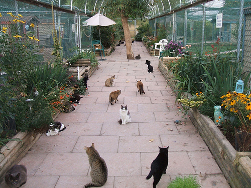 RAPS Cat Sanctuary