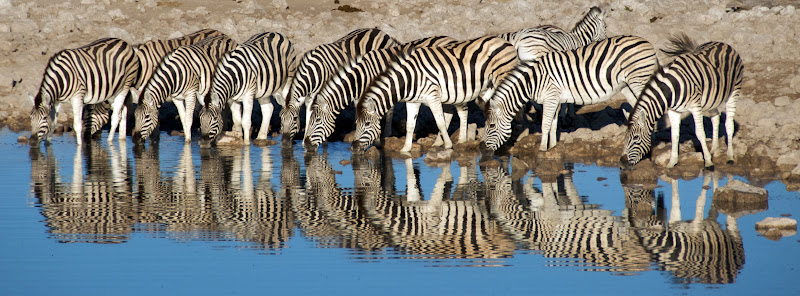 zebras at a watering hole in Ethoshia National Park in Namibia