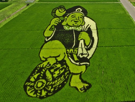 rice-paddy-art (21)