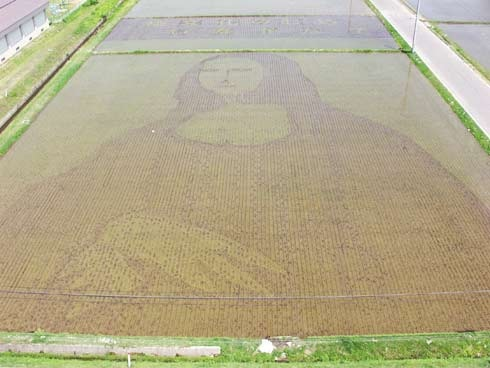 rice-paddy-art (25)