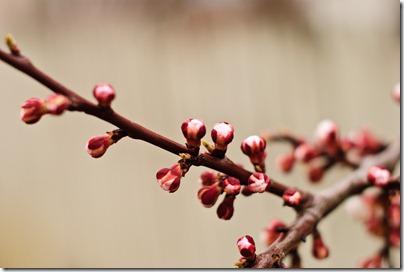 details-late-spring-blossom